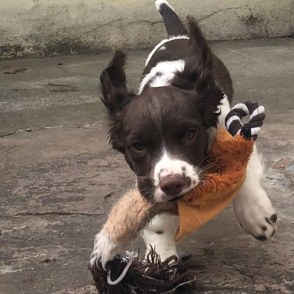 bowwow burnley puppy